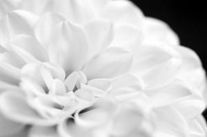 Blütenmakro II