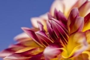 Blütenmakro